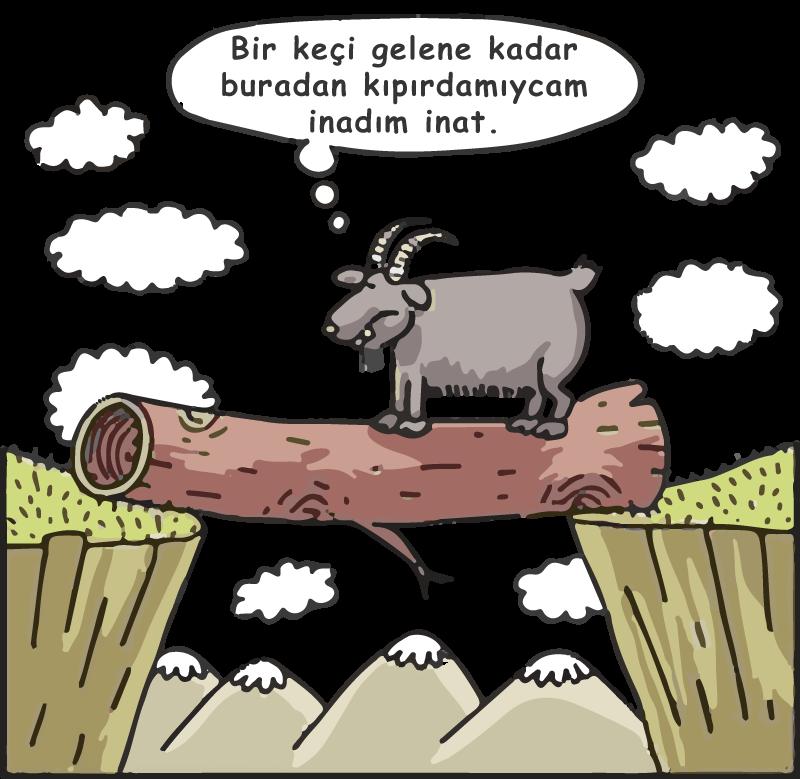 Keçi inadı